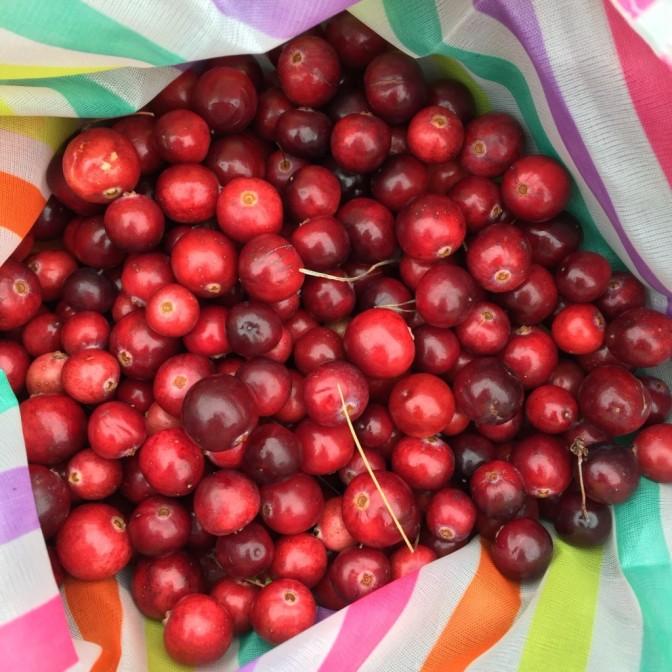 Vandaag starten de Cranberryweken!