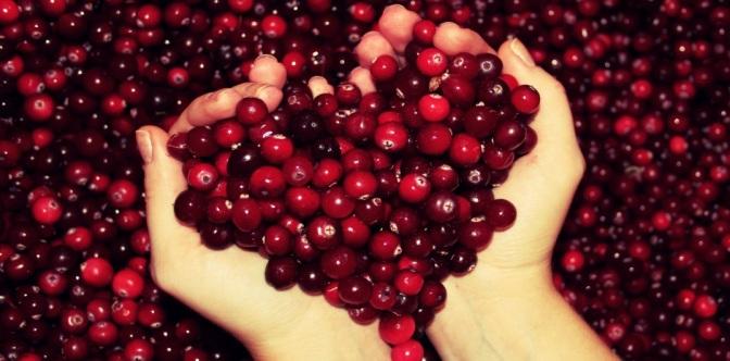 Opbrengst Cranberryveiling € 1.500,—!